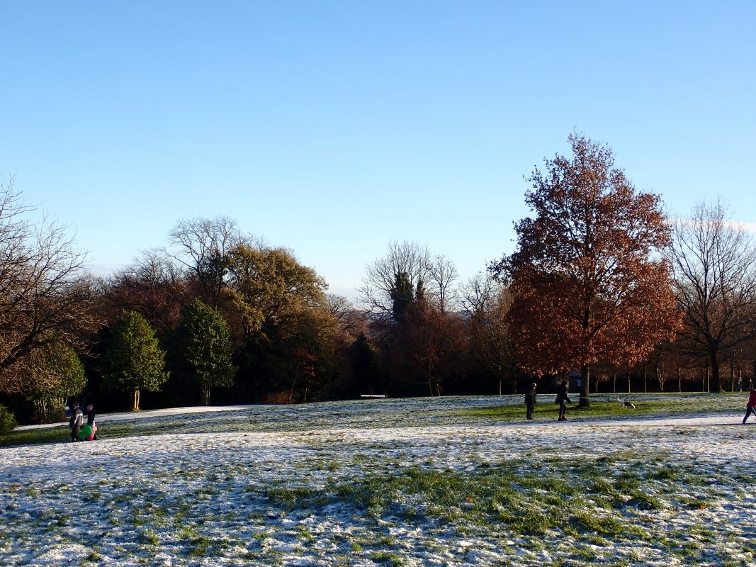 view of the park with some light snow on the grass, background of trees with a prominent birch tree in the front with red leaves